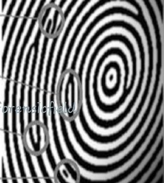 Importance Of Fingerprint Identification Forensic S Blog